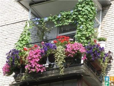 Жителю большого города, придя с работы, иногда очень хочется расслабиться и отдохнуть от городского шума и суеты среди зелени, ярких цветов и приятного аромата. Это можно сделать прямо в собственной квартире – выйдя на балкон или лоджию, если соответственно оборудовать ее. Большинство современных квартир имеют лоджию или балкон, которые отличаются тем, что лоджия имеет только одну открытую сторону. Благодаря новейшим архитектурным и дизайнерским разработкам, эти элементы квартиры или дома, удивляют разнообразием форм и размеров. Сейчас дизайнеры уделяют много внимания интерьеру лоджий и балконов, потому что покупатели недвижимости стали придавать им большое значение. Квартира без балкона будет стоить значительно дешевле. Вот эти лоджии, а также балконы и являются тем самым местом в квартире где, придумав собственный интерьер или используя, дизайнерские разработки, человек может создать свой райский сад.  Балконы, внутренние дворики и веранды  Уже в Киевской Руси появились архитектурные формы, предшественники нынешних балконов, которыми украшали княжеские терема. В средневековой Европе балконы, превращенные в прекрасные сады, были романтическим местом встречи влюбленных или служили для званых обедов местной знати. За прошедшие века балконы не очень сильно изменились: все те же металлические гнутые решетки, те же горшки с цветами и зеленью. Да и сегодня балконы и лоджии в Западной Европе напоминают яркие клумбы или маленькие, зеленые садики. Хозяйки соревнуются между собой за создание самого уютного интерьера. В разные времена к балконам относились по-разному. Еще совсем недавно, у некоторых людей они были своего рода кладовками, где хранился всякий ненужный хлам, а другие люди летом засаживали балконы цветами, создавая необыкновенные композиции. Такие балконы всегда выделялись на фоне однообразных фасадов и радовали своим видом и хозяев, и прохожих. Очень заметно отношение к балконам и лоджиям изменилось после того, как их стали стеклить. Благодаря остеклению лоджия 