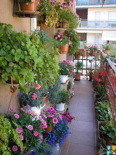 Озеленение балконов в дизайн интерьре